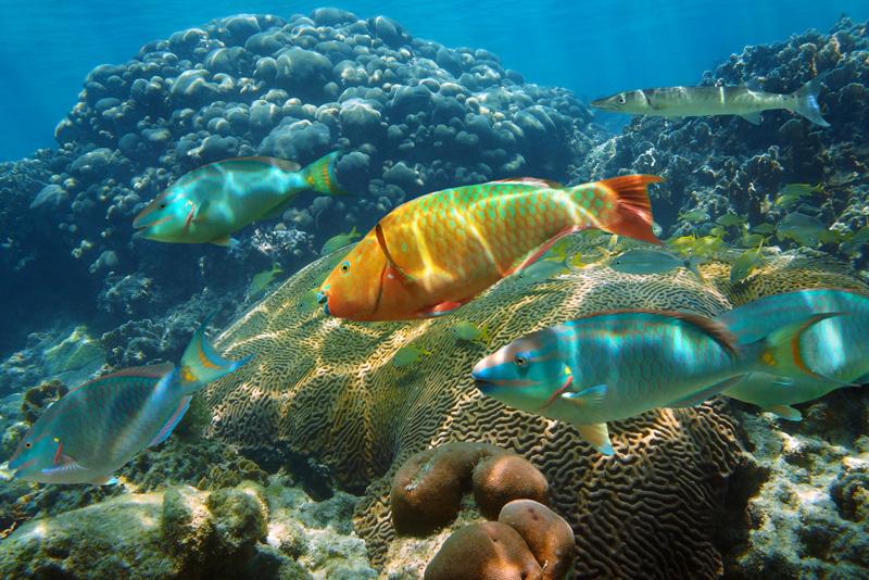 Sea World Aqua Mania