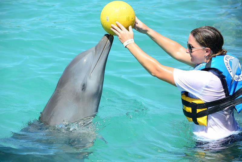 Découverte des dauphins de Tango