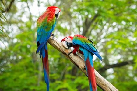 Parc de Sint Maarten